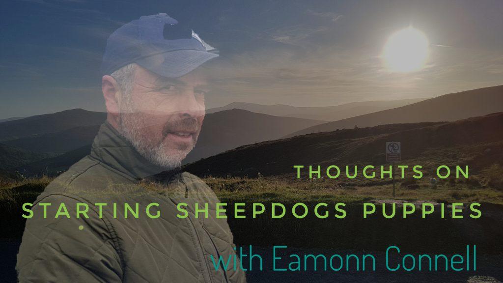 Eamonn Connell sheepdog trainer