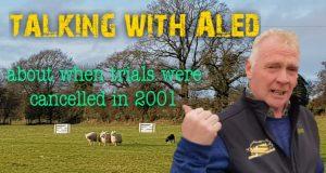 Aled owen in sheepdog trial