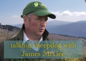 James McGee sheepdog trials