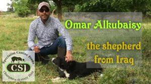 iraq sheep